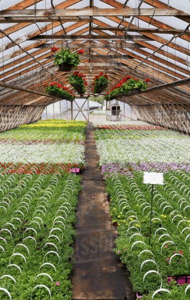Clo2 in Greenhouse & Horticulture